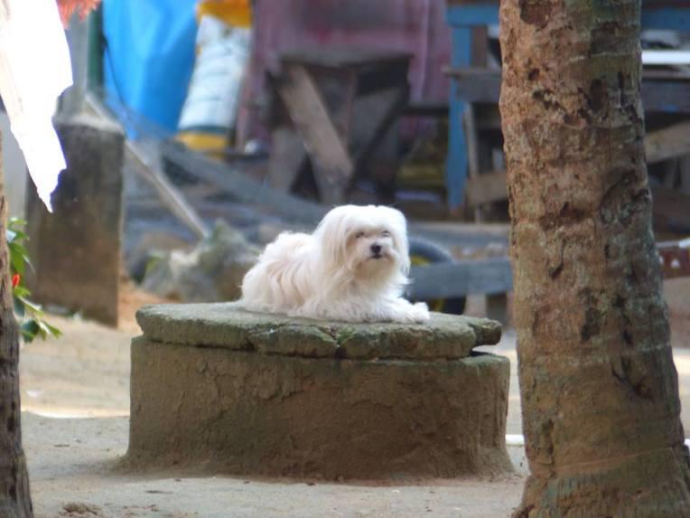 Kylää vartioi jalorotuinen koira.